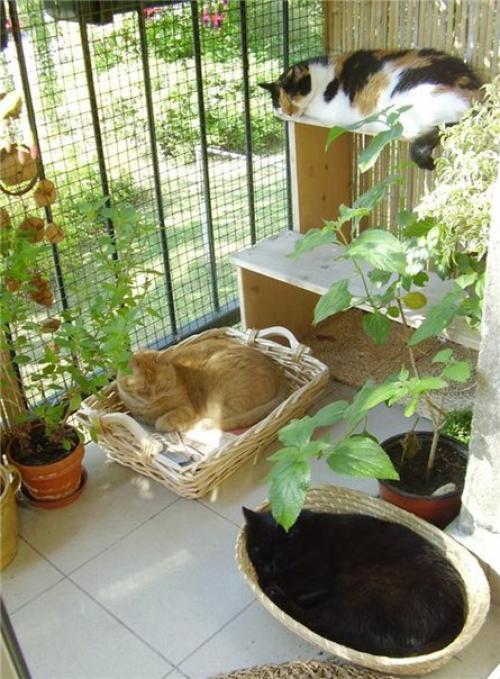 Обустраиваем балкон для кошки - lapkina.xxx.