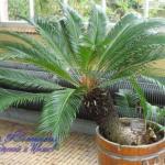 Древние растения в домашних условиях?