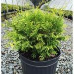 10 растений для идеального микроклимата в доме?