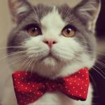 Из мудрых мыслей кота семёна.