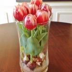 Выращивание тюльпанов в прозрачной вазе?