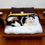 Кскотоновости. Эксклюзивные спальни для кошек.
