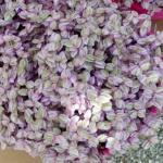 Каллизия. Ампельное растение из семейства коммелиновые.