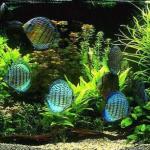 Обслуживание и чистка аквариумов как бизнес.