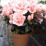 Растения - кондиционеры.  О пользе домашних растений можно говорить бесконечно.