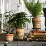 Здесь будет сад: 10 лучших растений для малогабаритки.