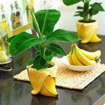 Как вырастить банан дома.