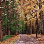 Красивые и малоизвестные осенние парки в Москве.