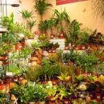 Растения для здоровья?