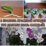 3 правила красивой орхидеи.