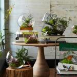 Флорариум или сад в вашей гостиной.