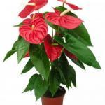 10 растений, которые принесут удачу и счастье в ваш дом.