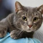 , . ** `**.,, . ** `**., лайфхаки для хозяев кошек.