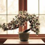 5 основных ошибок при пересадке покупных цветов.