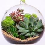 Идеи@Cvetochniyvodopad. Волшебный сад за стеклом - флорариум своими руками?