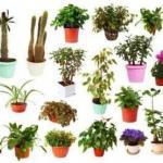 Основные группы комнатных растений?