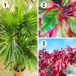 15 лучших растений для каждой комнаты.