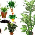 Магия домашних растений.