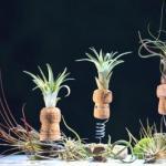 В первой половине августа наш магазин новыми интересными растениями пополнится?