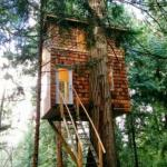 Этот дом на дереве спроектирован и построен одним человеком - Джеффом де рюйтером.